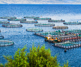 Aquaculture in Europe